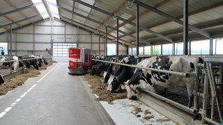 mleko-krowy